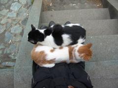 江ノ島 聖天島公園にいた猫
