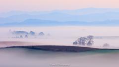 霧中の末那