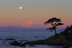 朝陽の中の富士山