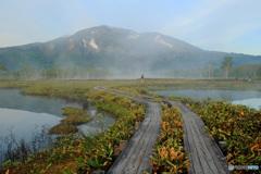 湿原を歩く