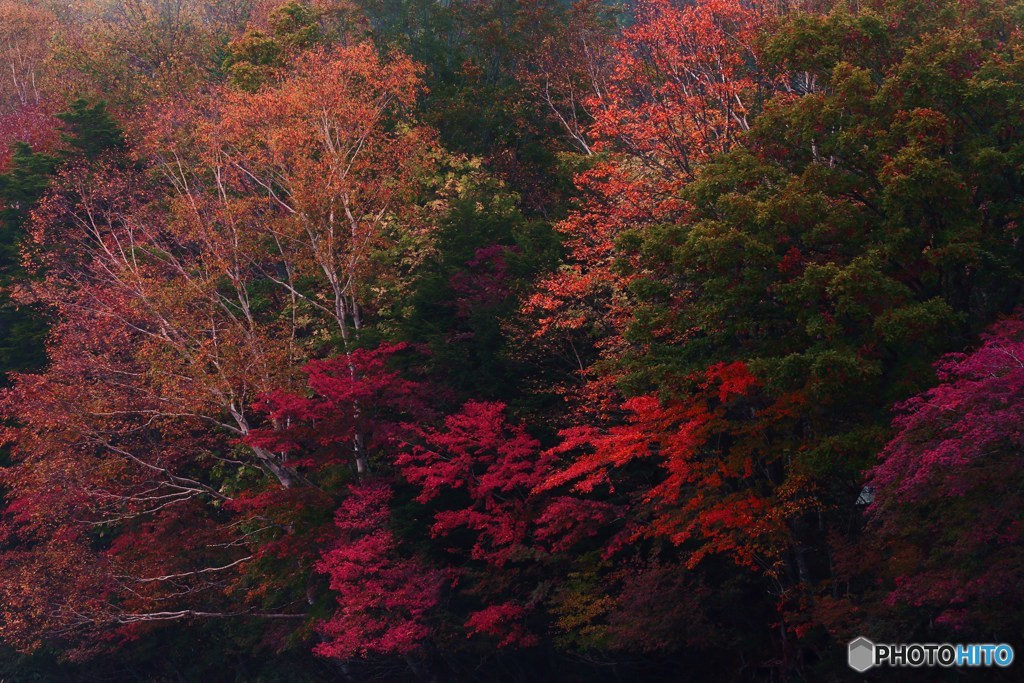 紅葉の日光