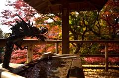 秋深まる東京