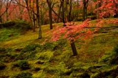 秋の箱根を訪れて -紅-
