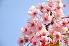 やっと、春!