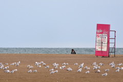 砂浜フォトグラファー