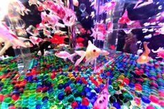 アートな金魚たち