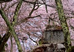 sakura woods