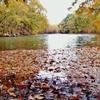 湖面に浮く落葉