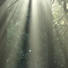 光のシャワー その1