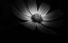 SHAPE OF FLOWER