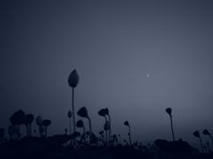 月下睡蓮 ~monotone~