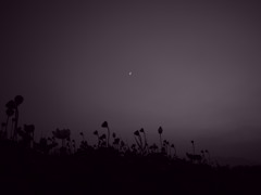 月下睡蓮 ~monotone Ⅱ~