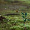 小さき緑の世界