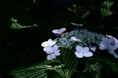 人は花を愛で、蜂は蜜を愛でる