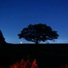 月と飛行機と双子の樹