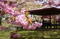 函館「オニウシ公園」