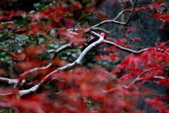 Nature「いつまで続く自粛生活」