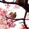 Nature「早春」