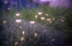 Nature「オールドレンズ」