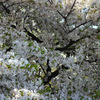 Nature「一気にやって来た春」