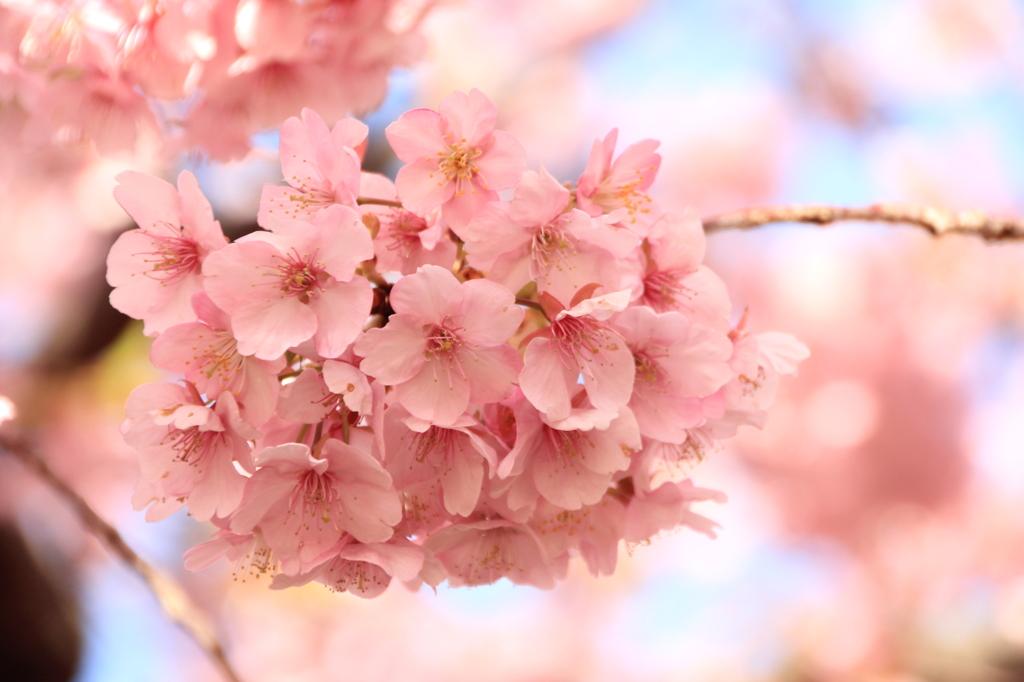 一足早い春の訪れ