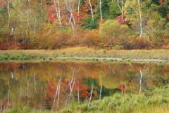 小さな池の秋