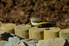 野鳥撮りの季節Ⅰ