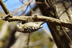 ガサツ者の野鳥撮り
