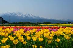 立山と花の饗宴