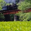 茶畑と新緑を抜けて