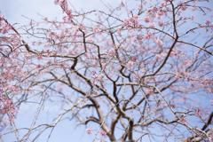 春ウララ。。。
