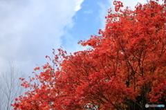 滝野すずらん公園 紅葉2