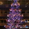 札幌ファクトリー クリスマスツリー