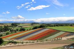 四季彩の丘から望む美瑛の風景
