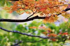 滝野すずらん公園 紅葉1