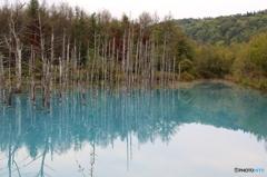 美瑛町 青い池5