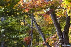 滝野すずらん公園 紅葉5