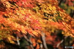 滝野すずらん公園 紅葉3