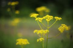 高原の花3
