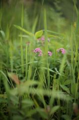 高原の花5