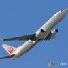 日本航空 737