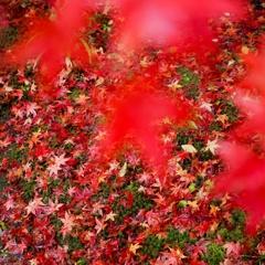 秋雨の贈り物
