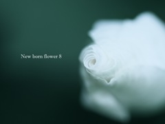 New born flower 8