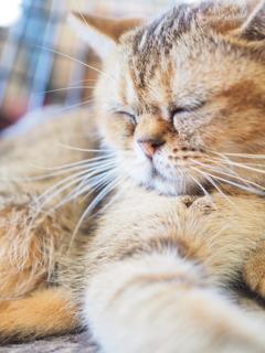 瞑想という名の昼寝
