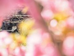 春感のエナジー