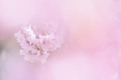 春色ヴェール