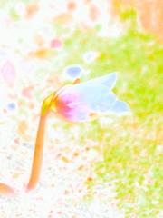 春色の息吹
