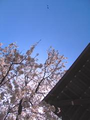 春空-harusora-