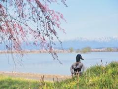 我が湖の春