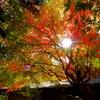 秋色のShine
